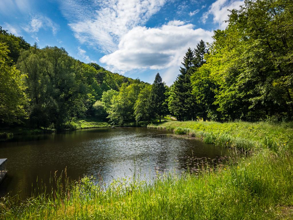 See-Blick-MTB-Pfälzerwald