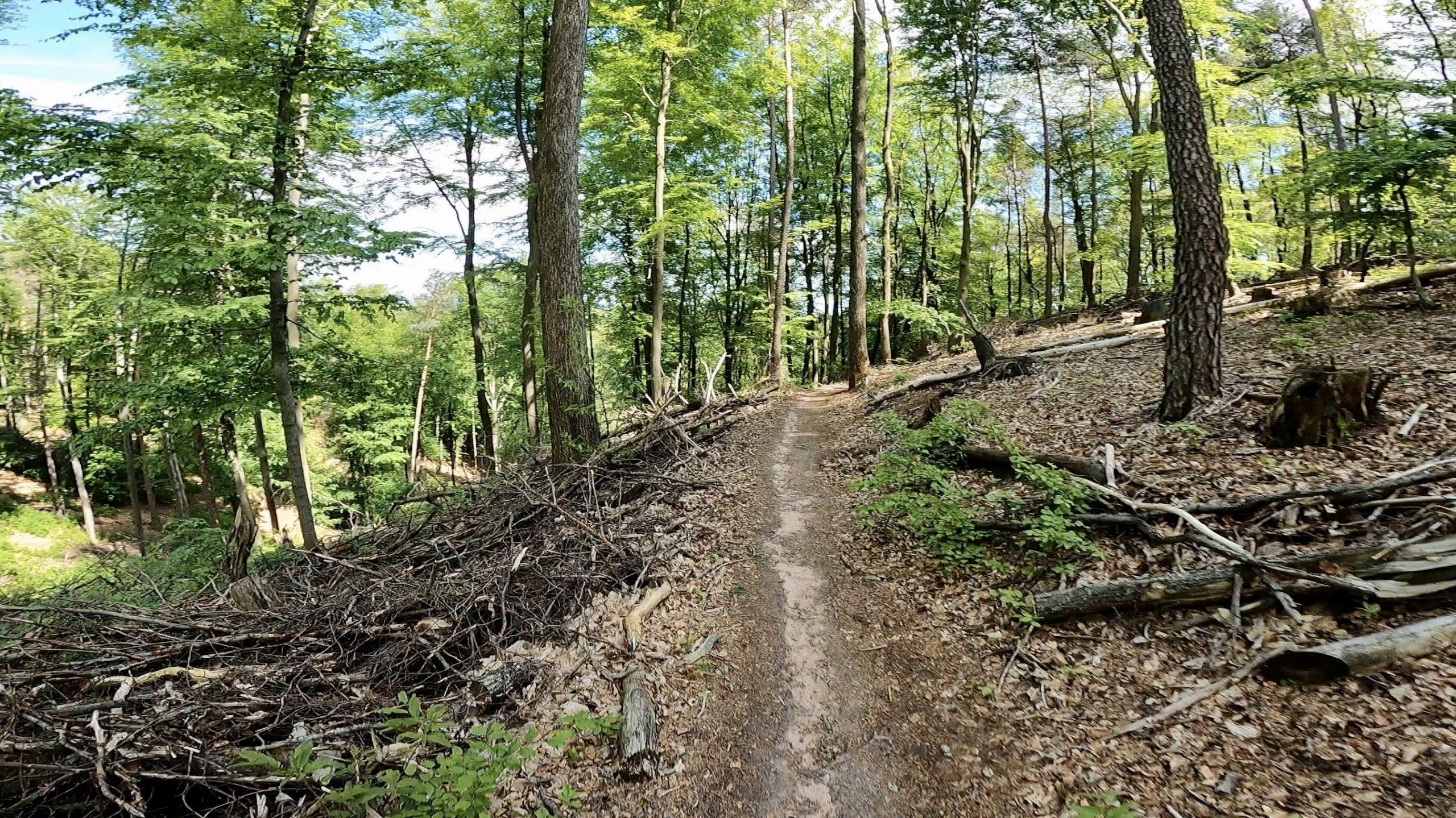 Genuss-Trail-Pfälzerwald